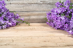 Purple campanula  blue bell flowers on wooden background Stock Images