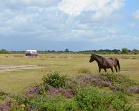 Purple camper in the New Forest Royalty Free Stock Image