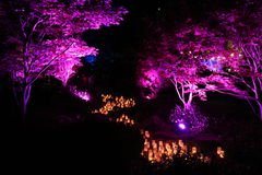Purple Candle Festival Royalty Free Stock Image