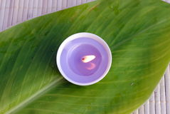 Purple candle on a green leaf Stock Photo