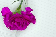a purple carnation flower on a page of a notebook stock photography