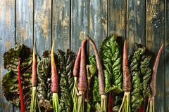 Purple carrot with chard. Raw organic purple carrot with chard mangold leaves over old wooden plank background. Top view with copy space. Food background Royalty Free Stock Photography