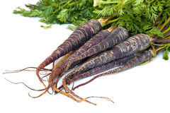 Purple Carrots Stock Photos
