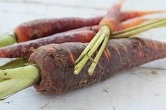 Purple carrots in pile Stock Images
