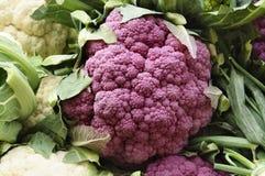 Purple cauliflower Royalty Free Stock Photos