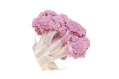 Purple cauliflower Stock Image