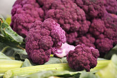 Purple Cauliflower 2. Amazing hue, purple cauliflower vegetable on white background with crisp green leaves Stock Photography