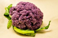 Purple cauliflower with green leaves - Brassica oleracea, Botrytis. For food and vegetarian concept Stock Images