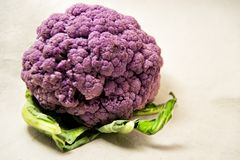 Purple cauliflower with green leaves - Brassica oleracea, Botrytis. Purple cauliflower with green leaves on a white background - Brassica oleracea, Botrytis Stock Images