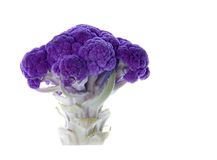 Purple Cauliflower Isolated Stock Photos