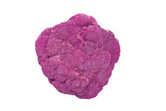 Purple cauliflower. On white background, top view, close up Royalty Free Stock Photography