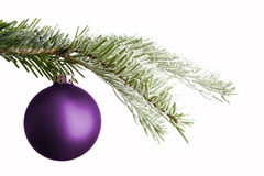 Purple Christmas ball on a snowy branch Stock Photo
