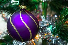 Purple christmas ball on a spruce branch. New year Stock Photos