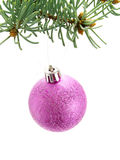 Purple Christmas bauble on Christmas tree Stock Photo
