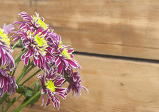 Purple chrysanthemum bouquet closeup Stock Photos