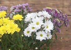 Purple chrysanthemum bouquet closeup Stock Photo