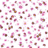 Purple Chrysanthemum and Daisy Buds Pattern Stock Photo
