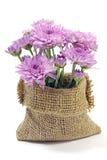 Purple Chrysanthemum. royalty free stock images