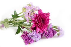 Purple Chrysanthemum and Statice flowers , Pink purple tone flow. Ers on white background Royalty Free Stock Photos
