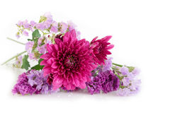 Purple Chrysanthemum and Statice flowers , Pink purple tone flow. Ers on white background Royalty Free Stock Photo
