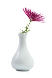 Purple Chrysanthemum in vase Stock Photos