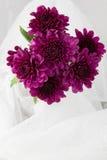 Purple Chrysanthemums isolated on white Stock Photos