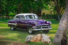 Purple classic vintage, retro car standing in tropical garden Stock Photography
