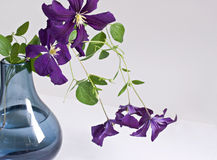 Purple Clematis Bouquet Stock Photography