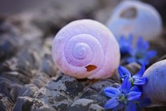 Purple, Close Up, Seashell, Organism Royalty Free Stock Images