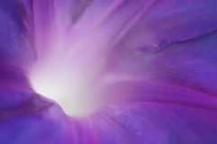 Purple closeup of inside of a flower.  Stock Images