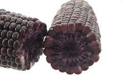 Purple color corn Royalty Free Stock Photo