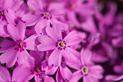 Purple color in a garden Royalty Free Stock Photo