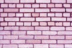 Purple color grungy brick wall pattern. Royalty Free Stock Images
