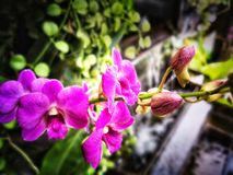 Purple color of orchid plants on the tree royalty free stock photo