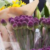 Purple color ornamental onion Royalty Free Stock Photo