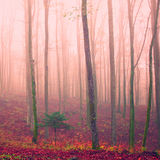 Purple color season forest Stock Photography