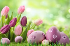 Purple colored easter eggs on the grass stock photos