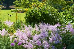 Purple colored flowers at agarden at Stanley Park, Vancouver royalty free stock images