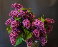 Purple common lilac (syringa) in vase on black background Royalty Free Stock Images
