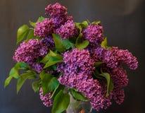 Purple common lilac (syringa) in vase on black background Royalty Free Stock Photos