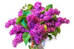 Purple common lilac (syringa) in vase isolated on white backgrou Stock Images
