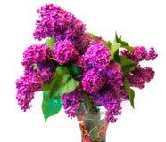 Purple common lilac (syringa) in vase isolated on white backgrou Royalty Free Stock Photography