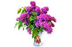 Purple common lilac (syringa) in vase isolated on white backgrou Royalty Free Stock Photos