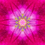 Purple Concentric Flower Center. Mandala design Royalty Free Stock Image