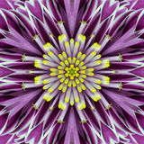 Purple Concentric Flower Center Mandala Kaleidoscopic design Stock Photo