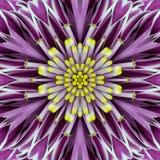 Purple Concentric Flower Center Mandala Kaleidoscopic design Stock Photo