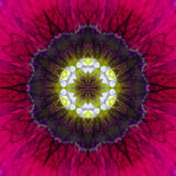 Purple Concentric Flower Center Mandala Kaleidoscopic design Royalty Free Stock Photography