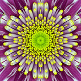 Purple Concentric Flower Center. Mandala Kaleidoscopic design Stock Image