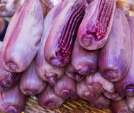 Purple corn Stock Photos