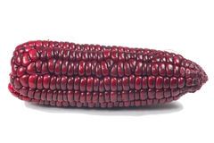 Purple corn cob Stock Photography